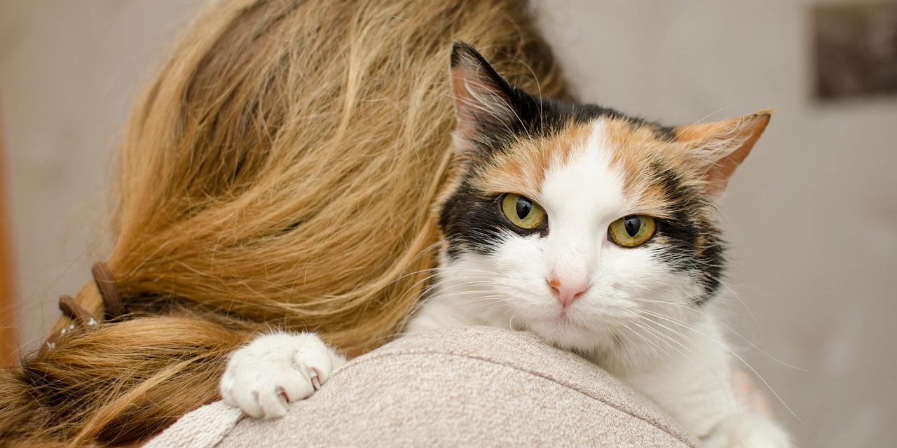 Maltraitance animale : que contient la proposition de loi qui arrive à l'Assemblée ?