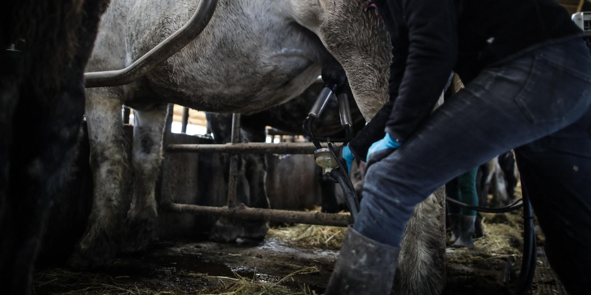 """Prix du lait : """"Les industriels ne jouent pas forcément la totale transparence"""""""