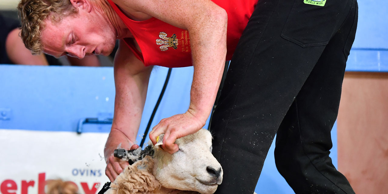 Two Welsh And New Zealand New World Shearing Champions