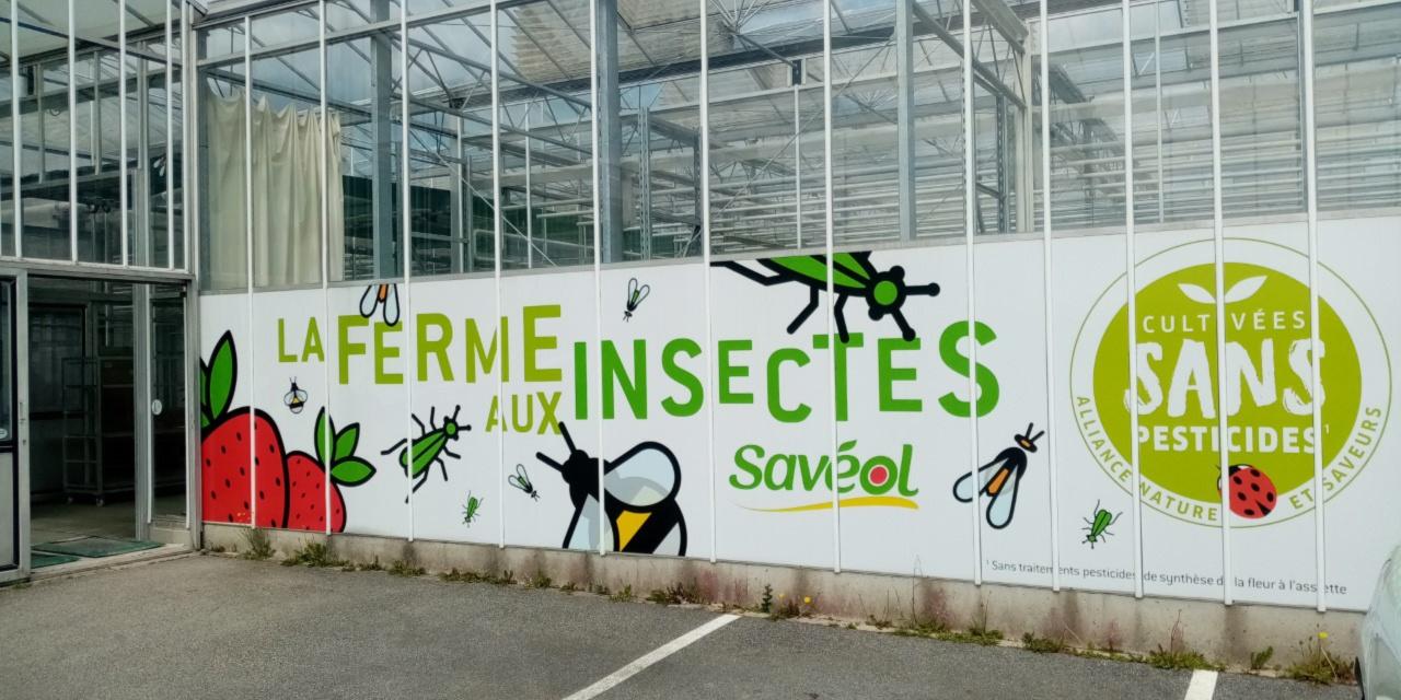 Dans le Finistère, une pouponnière de millions d'insectes pour protéger les tomates