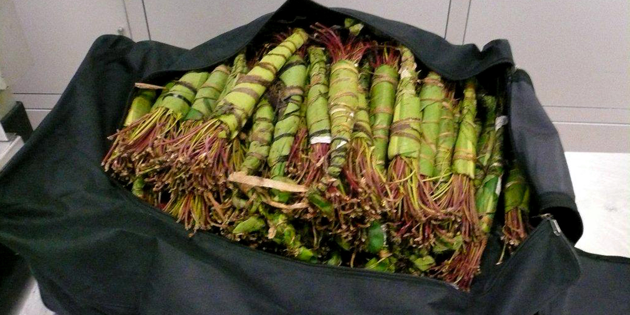 INFO EUROPE 1 - Hundreds of kilos of khat, a banned drug in