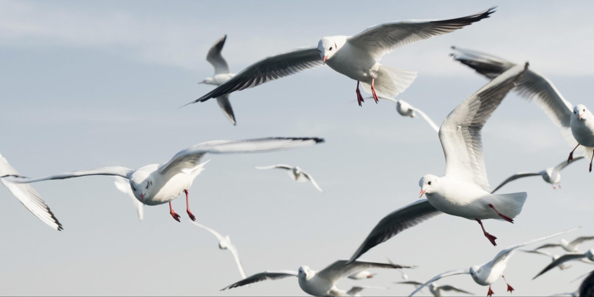 Il y a 50 milliards d'oiseaux sur Terre, six fois plus que les humains !